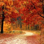 leaves on the Ground | Job Recruiters Kent