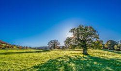 tree with sun   Temp Jobs Maidstone